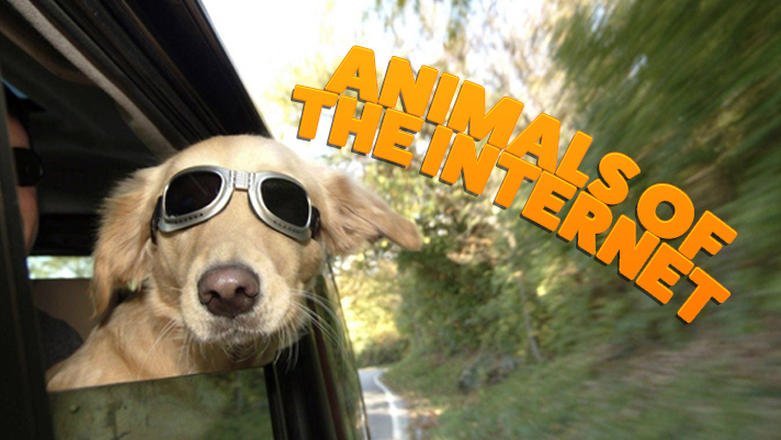 Animals of the Internet; dog wearing glasses in a car passing by plants